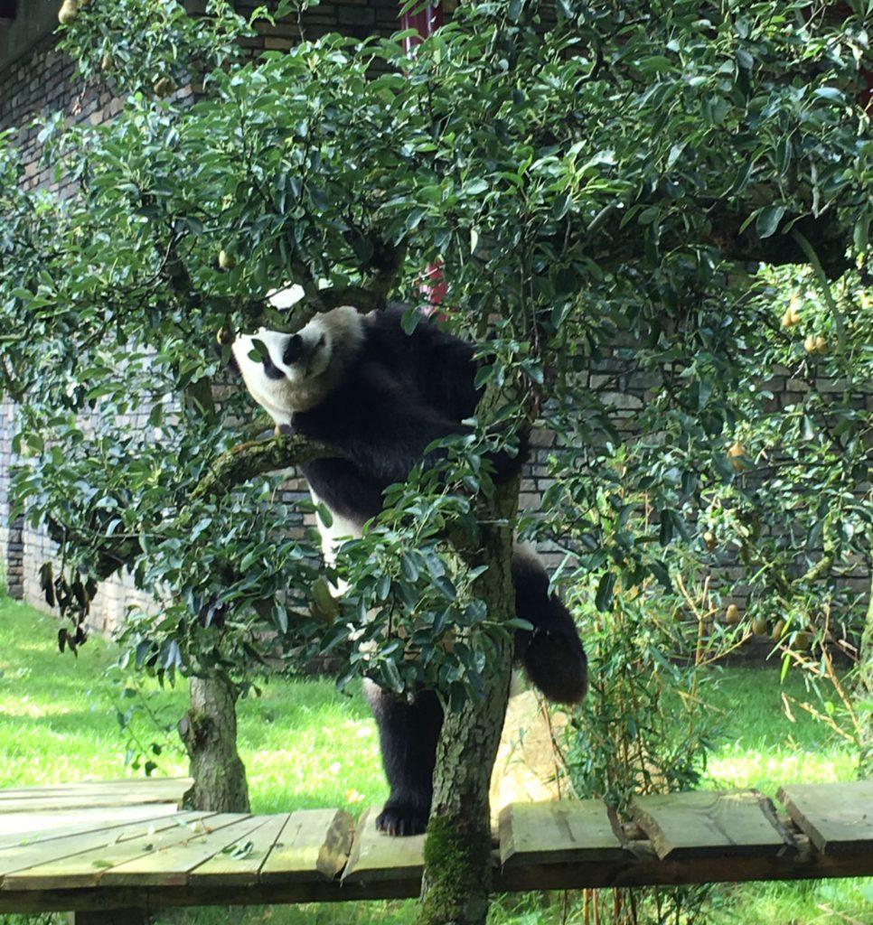 leukste dierentuin van Nederland