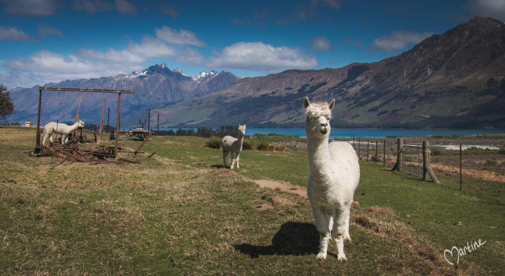 Nieuw-Zeeland met kinderen