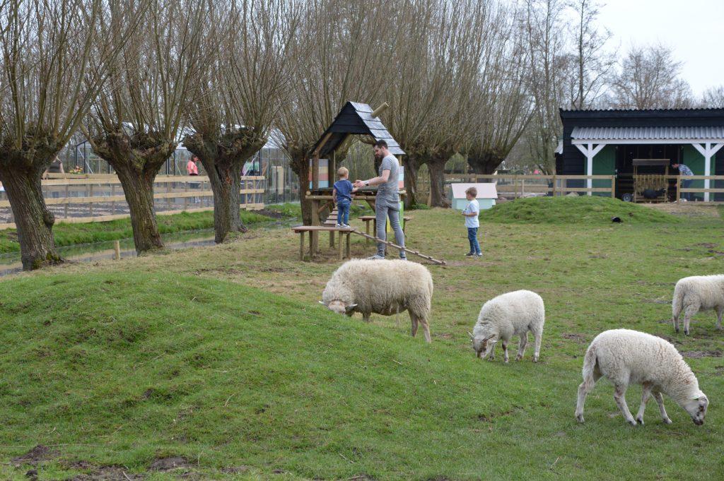 Dagje Avonturenboerderij Molenwaard