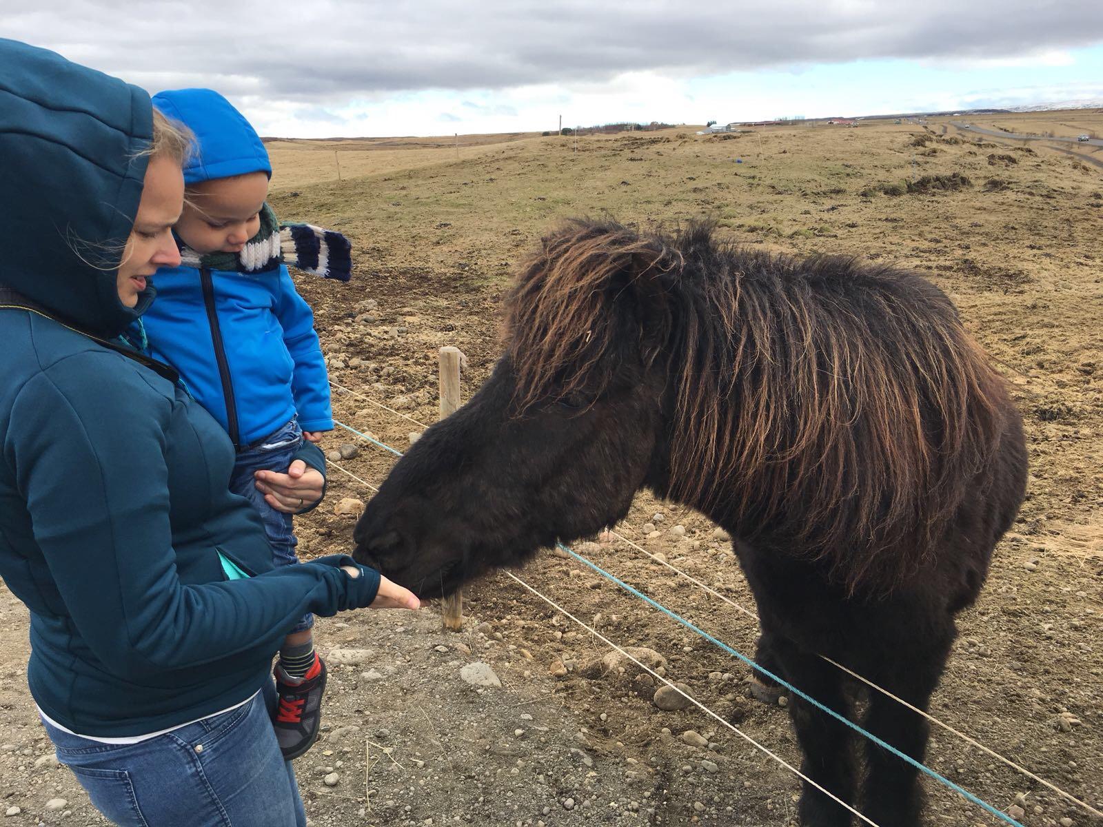kosten reis IJsland met kinderen